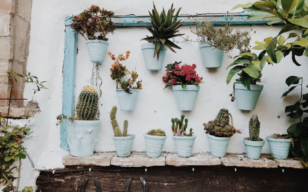 The Best Indoor Plants for Colourful Wall Planters, Hanging Pots and More