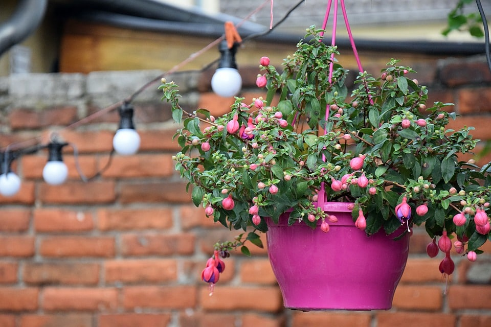 5 Advantages of Having a Vertical Garden Using the Modern Hanging Planter
