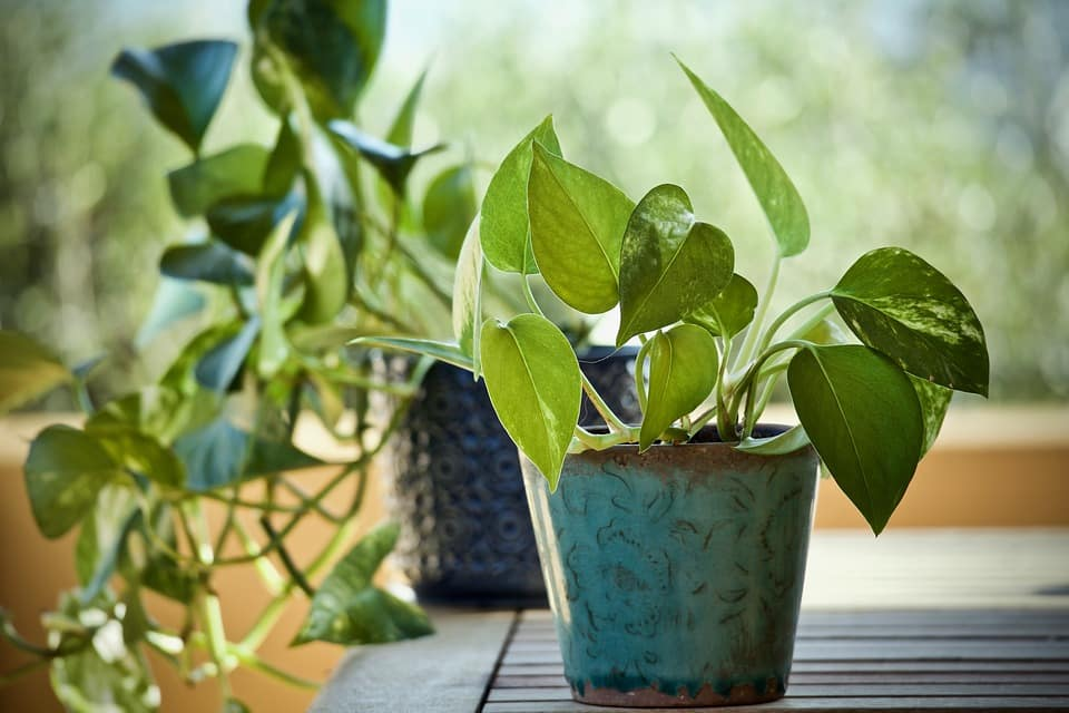 10 Easy to Care for Plants for Your Wall Planters Indoor