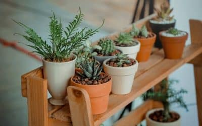 Great Ideas on Putting Hanging Wall Planters Indoor