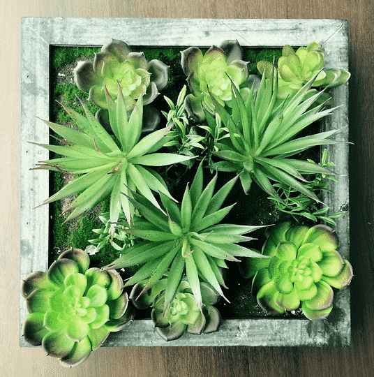 8 Unique Wall Planters Indoor to Brighten Your Vertical Garden