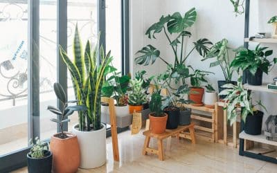 Plants That Bring out The Best in Small Spaces using Wall Hanging Pocket planters