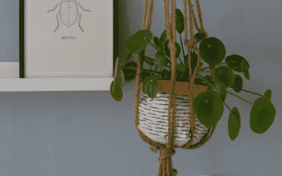The Benefits of Wall Hanging Planters on Human Health